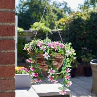 Star Gazing Lilies Hanging Basket
