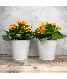 2 x Round White Metal Balcony Hanging Pot Planters