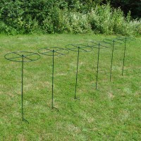 Grow Through Metal Circular Plant Supports 100cm x 40cm (Set of 6)