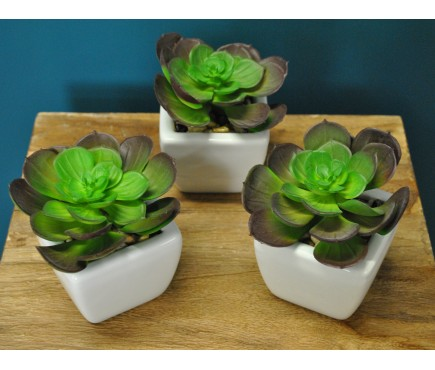 Set of 3 Artificial Succulents with Ceramic Pot