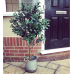 Artificial Olive Topiary Tree (120cm) by Gardman