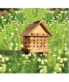 Interactive Solitary Bee Hive