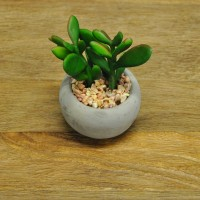 Artificial Mixed Succulent Pot Plants by Gardman