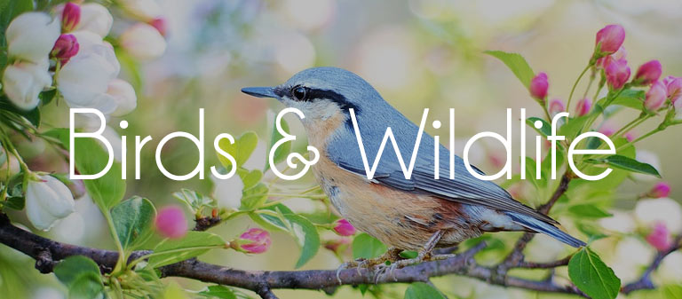 birds and wildlife products